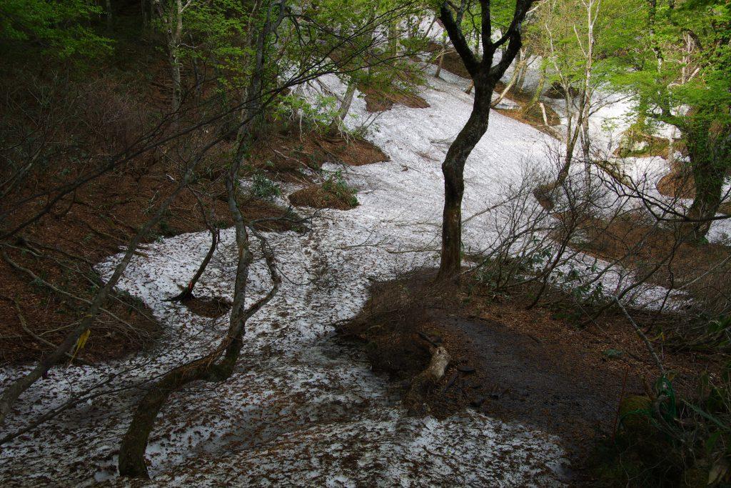 勝原コース 残雪